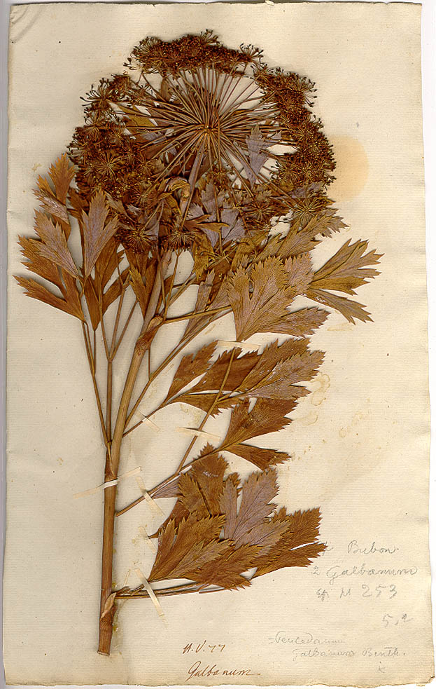 Museum Of Natural History Herbarium