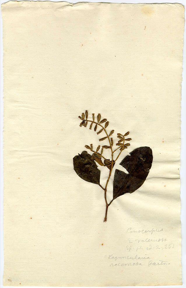 Swedish Museum Of Natural History Herbarium