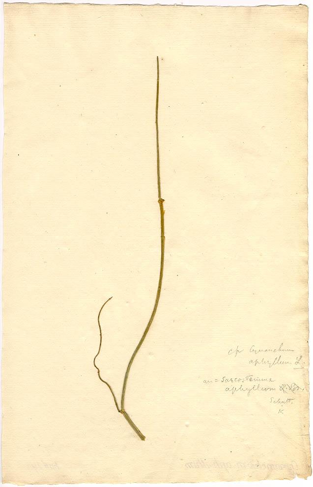 Museum Of Natural History Herbarium