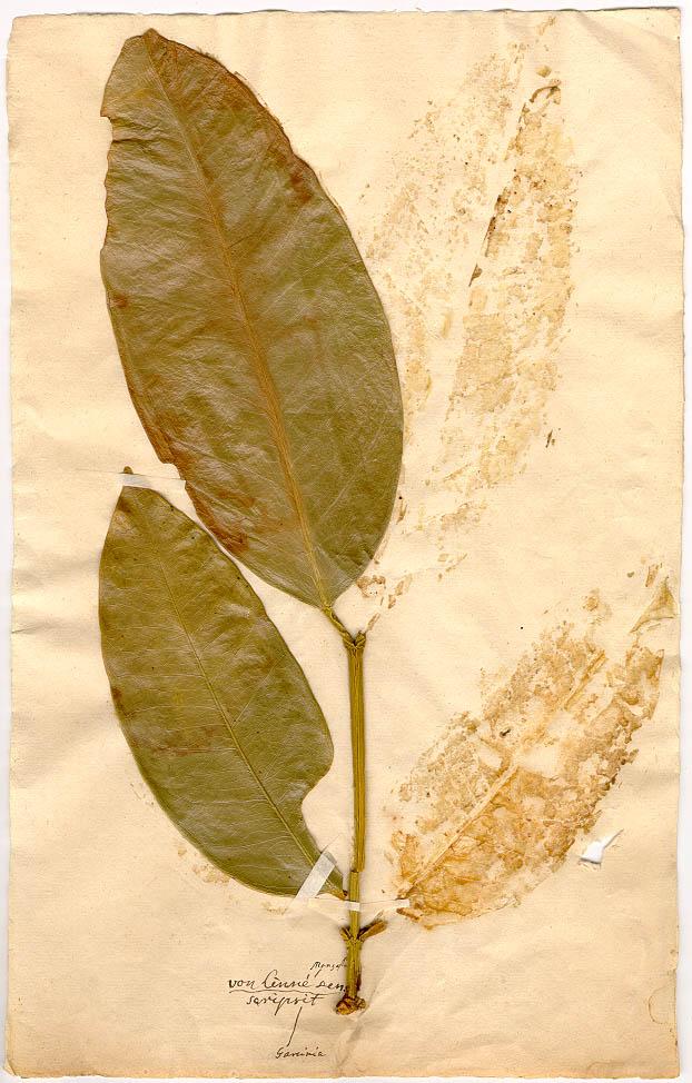 cuanto puedo adelgazar en una semana con herbalife